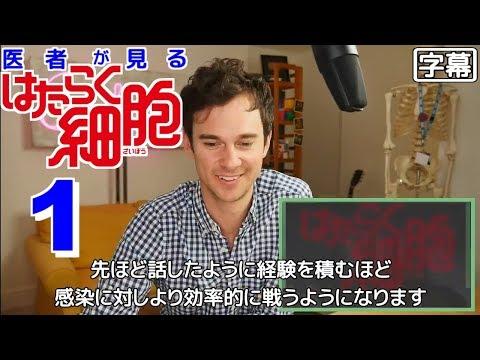 【日本語字幕】医者が見る はたらく細胞 1話 (素晴らしいですね) 外国人の反応