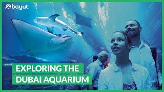 Dubai Aquarium & Underwater Zoo   The Dubai Mall