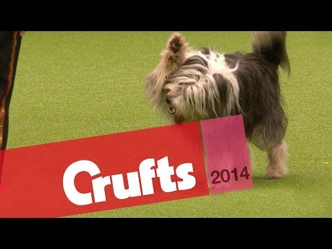 Heelwork to Music | Freestyle International Competition | Crufts 2014