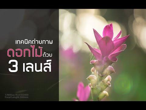 สอน ถ่ายภาพ :: พรานภาพ EP 19เทคนิคถ่ายภาพดอกไม้ด้วย 3 เลนส์
