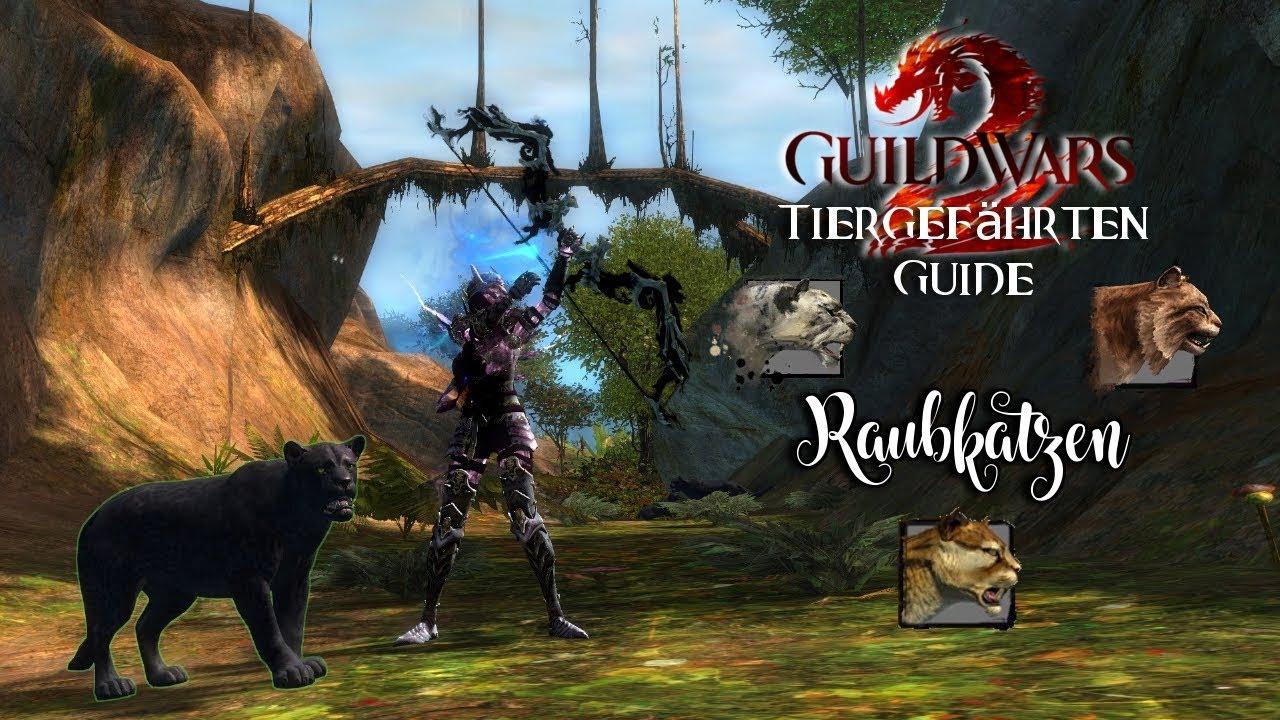 Genieße am niedrigsten Preis größte Auswahl an Räumungspreis genießen Guild Wars 2 Waldläufer Tiergefährten Guide Raubkatzen