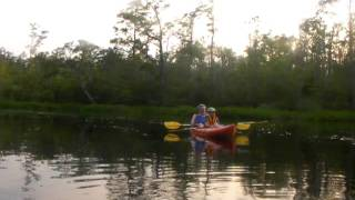 Alligator River Kayak Tour