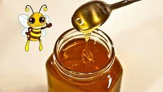 Schulfilm-DVD: Die Honigbiene (DVD / Vorschau)
