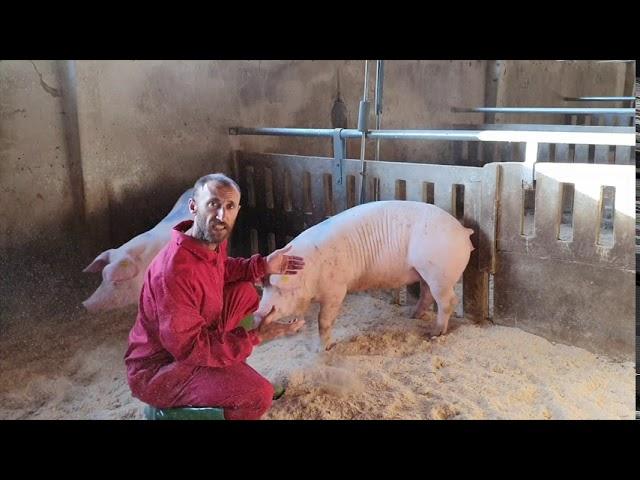 Maxico AG: Hablemos de bienestar animal.