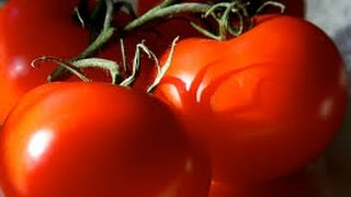 How to grow Tomato /  टमाटर at home ( in hindi ) easily