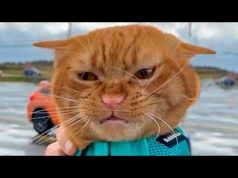 ПРИКОЛЫ С ЖИВОТНЫМИ ДО СЛЕЗ / Смешные КОТЫ 2021 / Приколы с КОТАМИ / Funny ANIMALS video #23