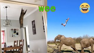 Funny cats and dogs 'wee' compilation on TIK TOK  Try Not To Laugh  | Chris Pets