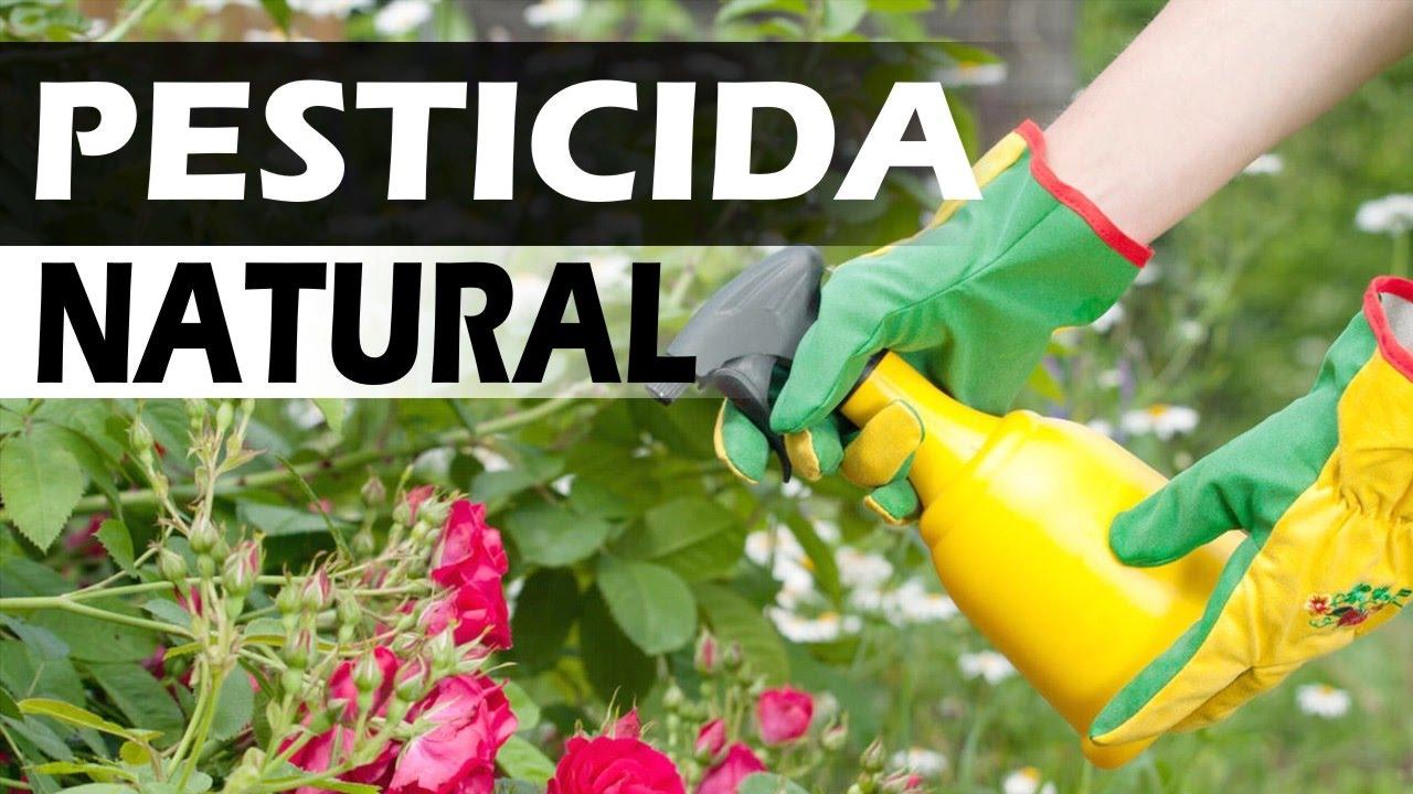 Pesticida para jard n casero youtube for Imagenes de estanques caseros