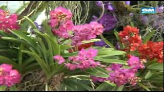 The Royal Flora 2006 ราชพฤกษ์ 2549 p 1/6