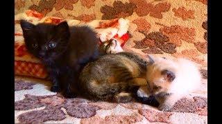 Бездомные котята. Кузя, Ричи и Любушка