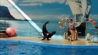 дельфинарий Немо в Анапе 2013(дельфинарий Немо в Анапе 2013., 2013-07-30T17:37:30.000Z)