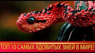 топ 10 самых ядовитых змей в мире!)Они повергнут тебя в ШОК!!!!