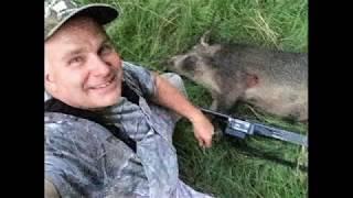 Shotgun Wild Hog