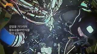 다이빙벨 해외판감독판 무료 공개