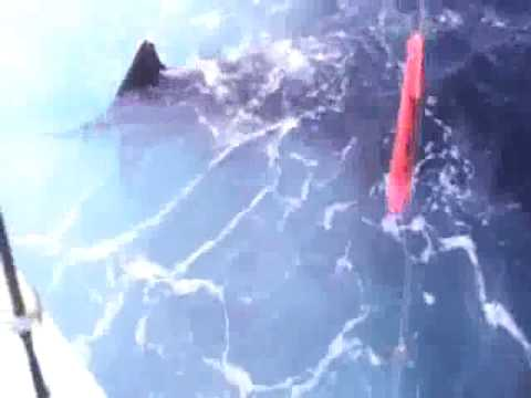 Costa Rica Sport Fishing - Marlin & Sailfish off the Pacific coast