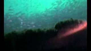 Miss Louise - Florida Panhandle Shipwreck Trail