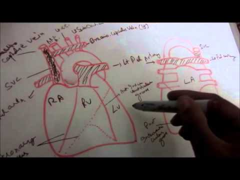 Anatomy Of Heart Part A Youtube
