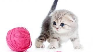 Как отучить котенка царапаться, кусаться и нападать на ноги?