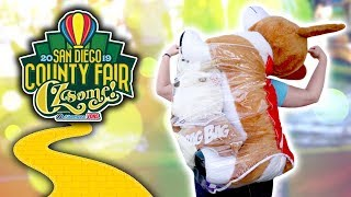 Crazy carnival game wins and more at the San Diego County Fair!