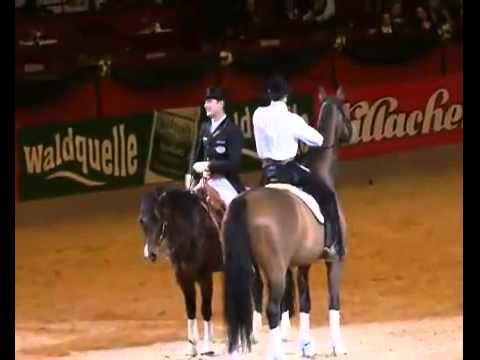 Dressage vs Western, Horses