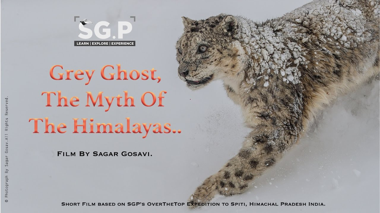 Grey Ghost, The Myth of the Himalayas.
