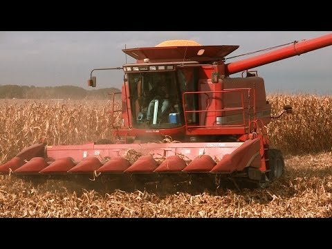 Johnson Family Farm - Case IH 2366 Combine on 10-28-2013