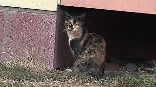 Друг семьи. «Трёхцветная кошка»
