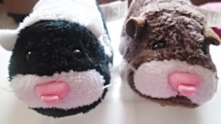 Cute - ZhuZhu Pets - Fashion Thumbnail