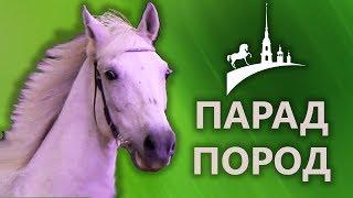 Разные породы лошадей: фьордская, карачаевская, тяжеловоз, рысак, вятская, башкирская, мини лошадь