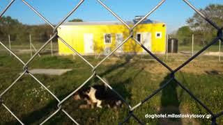 DOG HOTEL - Ώρα για παιχνίδι (Play time) 2 - ΜΙΛΑ ΣΤΟ ΣΚΥΛΟ ΣΟΥ
