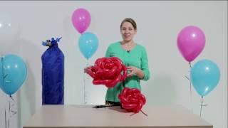 10 обучающий урок по аэродизайну большие розы из воздушных шаров