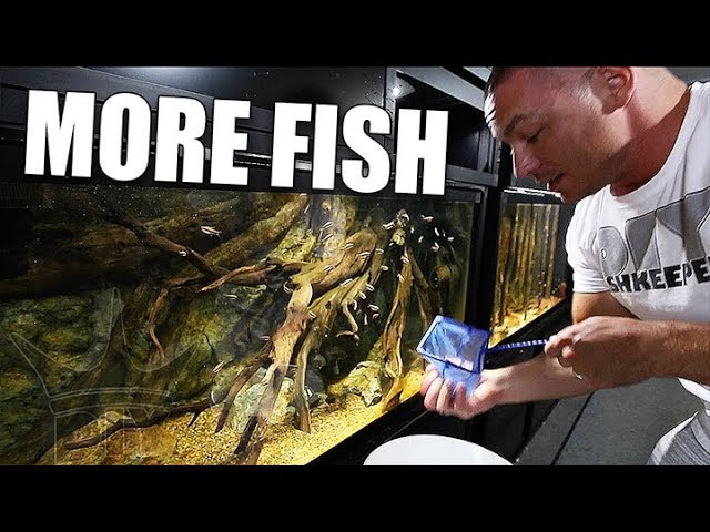 adding-the-fish-we-forgot-about