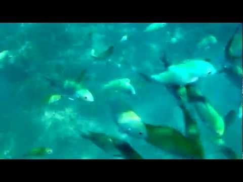 Balicasag Marine Sanctuary Snorkeling, Panglao , Bohol, It's More Fun in the Philippines