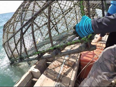 กู้ลอบปลาทะเลอ่าวทุ่งมหา ทะเลอ่าวไทย จังหวัดชุมพร Kind of network trap for Fish