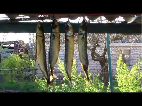 Как правильно вялить рыбу Для подвешивания рыбы
