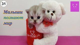 Малыши познают мир. #Кошки #Коты #Котята #Прикольные #Веселые #Красивые #Играют