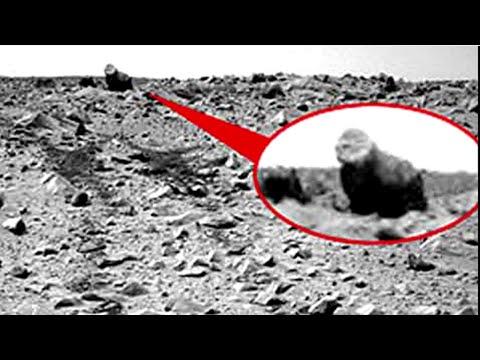 HARAMBE STILL A PROOF!! The Harambe Conspiracy! Life on Mars!?