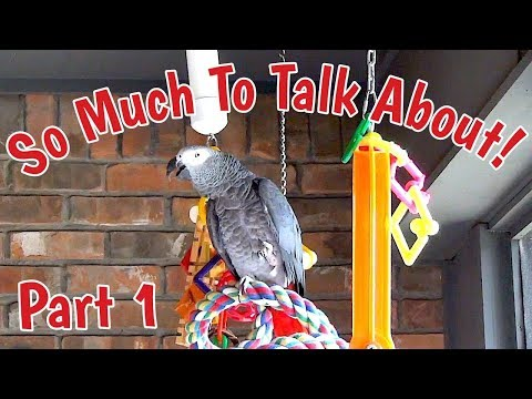 Einstein Parrot has so much to talk about Part 1