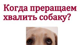 Когда прекращать хвалить собаку ? Когда переставать поощрять собаку?