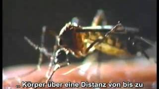 Wunder Des Gehirns Riechen und Schmecken - 3/4