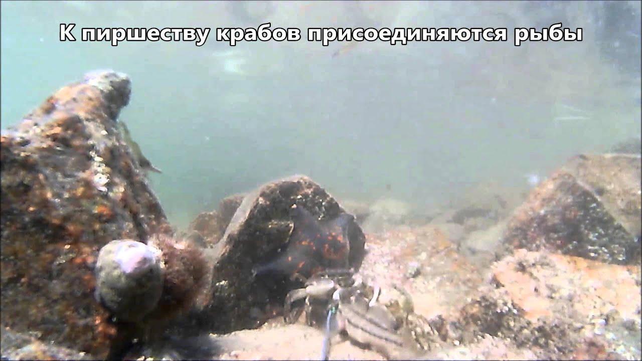 Сергей Русских в Магадане Краб вареный - YouTube
