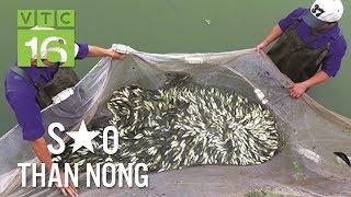 Nuôi cá giống, nông dân tay trắng thành tỷ phú | VTC16