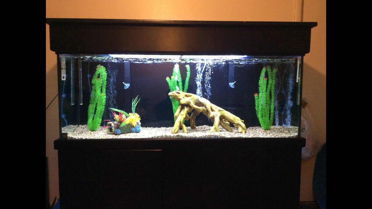 100 gallon aquarium setup with peacock bass youtube for Bass fish tank