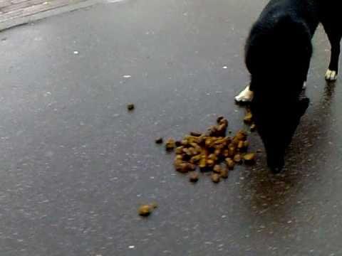 Вопрос: Зачем собака (фокстерьер) вываляла сь в говне?
