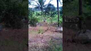 Download Video 4 serangkai faighting 3 MP3 3GP MP4