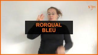 BIOLOGIE MARIN - Rorqual bleu