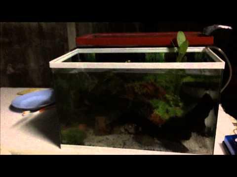 การจัดตู้ปลาสวยงาม  กลุ่ม12 By JB