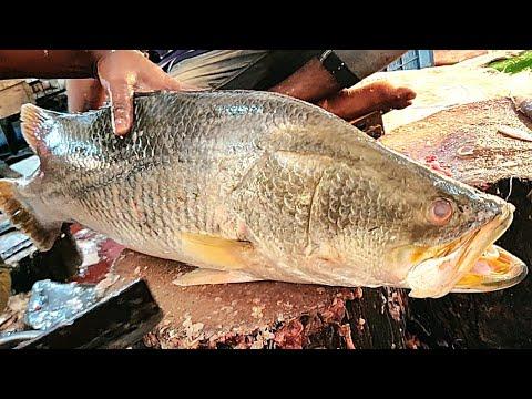 Admirable Huge Bhetki Fish Cutting Live In Fish Market | Bangladesh Fish Market