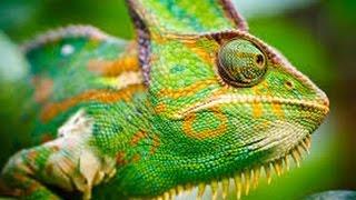 Chameleons Palma Aquarium Mallorca 4K