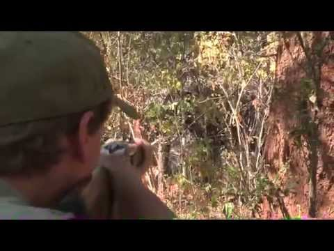 Elephant Hunt Zambezi Valley
